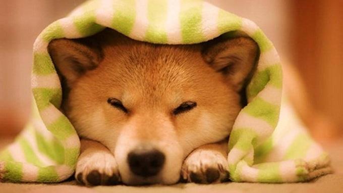 Mơ thấy chó