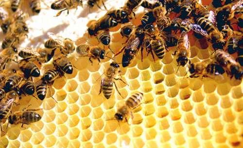 Điềm báo mơ thấy tổ ong bật mí điều gì? Đánh số gì bất bại?