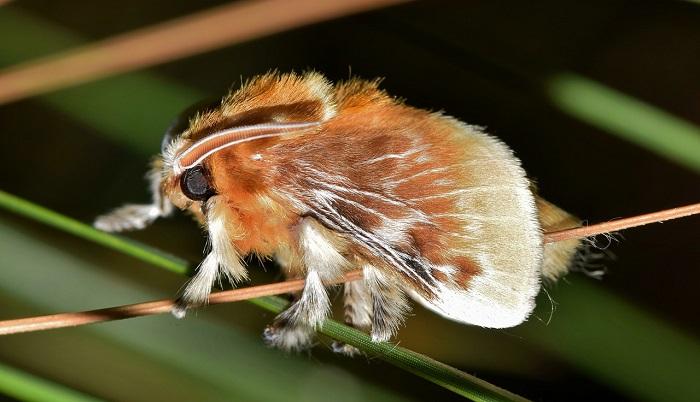 Mơ thấy côn trùng có ý nghĩa gì? Nên làm gì khi gặp côn trùng trong mơ
