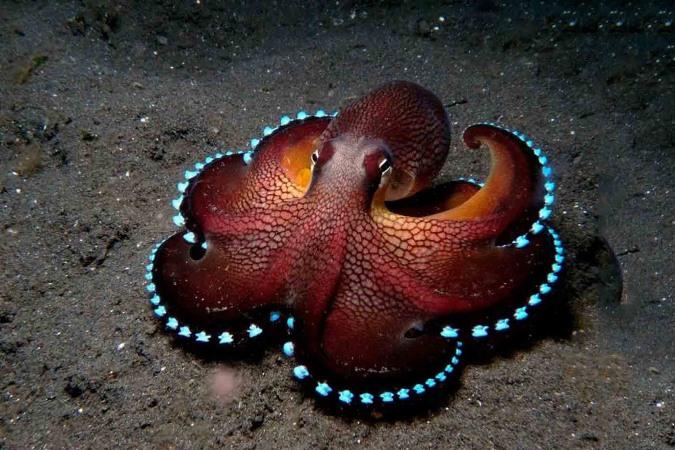 Nằm mơ thấy bạch tuộc là điềm báo điều gì? Đánh con gì may mắn?