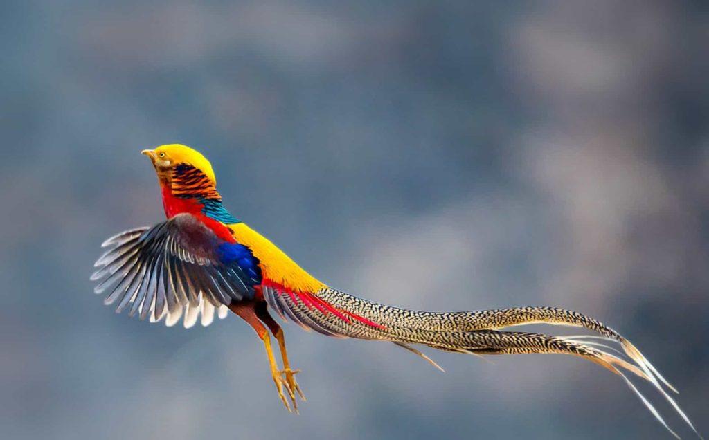 Nằm mơ thấy chim có điềm báo gì đặc biệt? Đánh con số mấy?