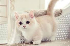 Mơ thấy mèo con có điềm báo gì, đánh con số may mắn nào?